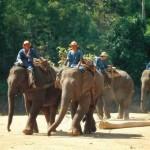 Thailand_43