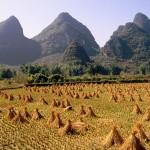 Rice_Field_Guangxi_Province_China