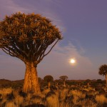 Krasota_v_Namibia