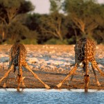 Namibia_V5-ZS6AYU