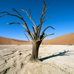 World_Africa_Namib-Naukluft_Park___Namib_desert___Namibia___Africa_008876_