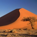 World_Africa_Sand_dunes_and_Acacia_Tree___Namib_Desert___Namibia___Africa_008881_