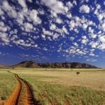 World_Africa_Tok_Tokkie___Namib_Desert___Namibia___Africa_008892_