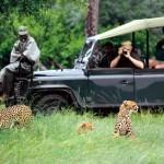 gui_safari