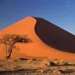 sand-dunes-and-acacia-tree--namib-desert--namibia